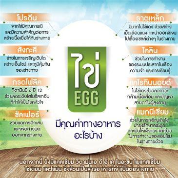รอบรู้เรื่องไข่ไก่